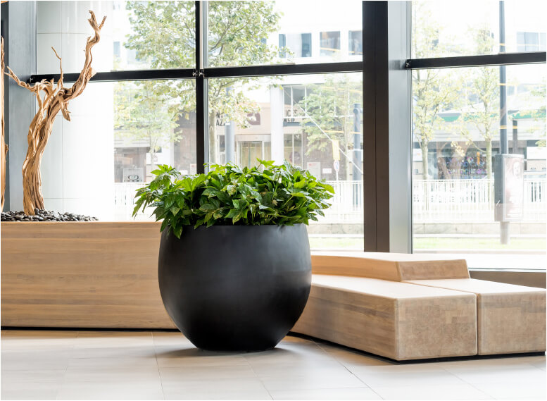 bg - - interieurbeplanting kantoorplanten kantoorbeplanting hydrocultuur onderhoud planten plantenonderhoud moswand moswanden