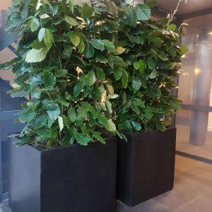 portfolio1-1 - - interieurbeplanting kantoorplanten kantoorbeplanting hydrocultuur onderhoud planten plantenonderhoud moswand moswanden