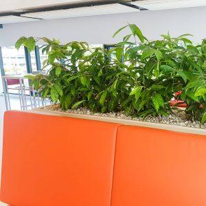 portfolio2 - - interieurbeplanting kantoorplanten kantoorbeplanting hydrocultuur onderhoud planten plantenonderhoud moswand moswanden
