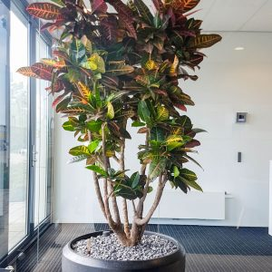 portfolio3 - - interieurbeplanting kantoorplanten kantoorbeplanting hydrocultuur onderhoud planten plantenonderhoud moswand moswanden