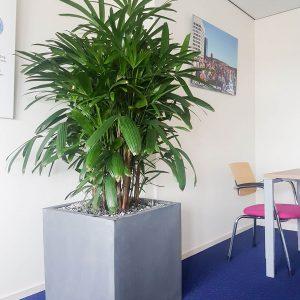 portfolio6 - - interieurbeplanting kantoorplanten kantoorbeplanting hydrocultuur onderhoud planten plantenonderhoud moswand moswanden