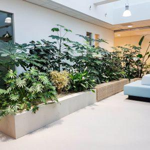 portfolio7 - - interieurbeplanting kantoorplanten kantoorbeplanting hydrocultuur onderhoud planten plantenonderhoud moswand moswanden