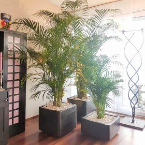 portfolio8 - - interieurbeplanting kantoorplanten kantoorbeplanting hydrocultuur onderhoud planten plantenonderhoud moswand moswanden