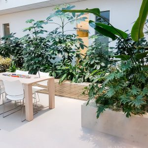 portfolio9 - - interieurbeplanting kantoorplanten kantoorbeplanting hydrocultuur onderhoud planten plantenonderhoud moswand moswanden