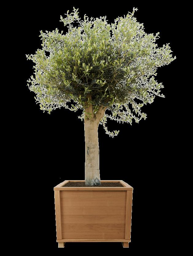 tree - - interieurbeplanting kantoorplanten kantoorbeplanting hydrocultuur onderhoud planten plantenonderhoud moswand moswanden