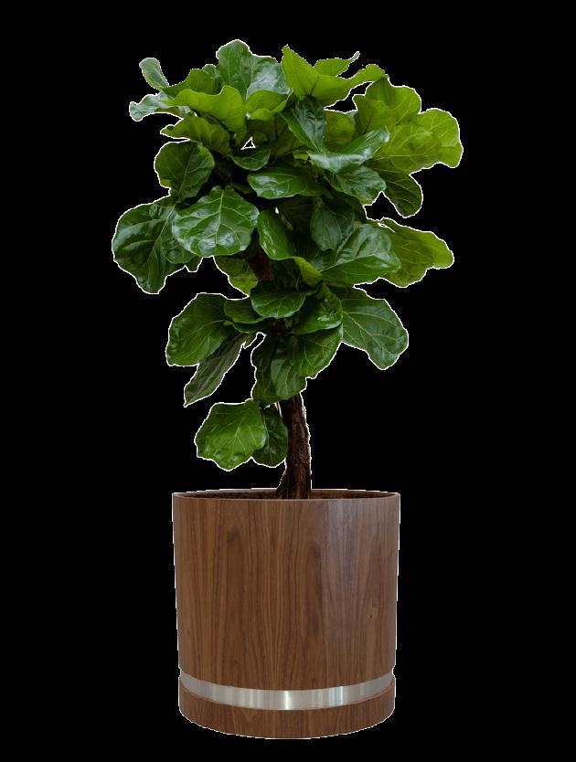 tree2 - - interieurbeplanting kantoorplanten kantoorbeplanting hydrocultuur onderhoud planten plantenonderhoud moswand moswanden