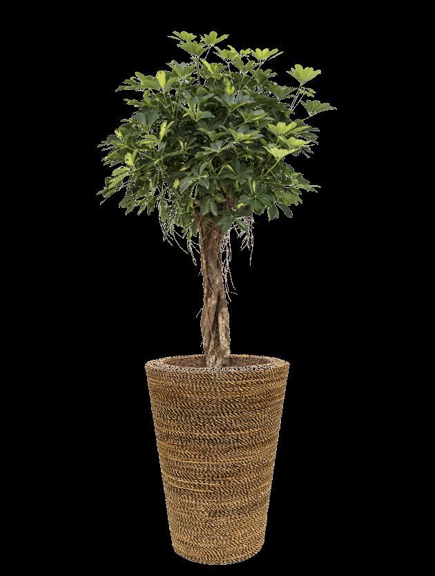 tree3 - - interieurbeplanting kantoorplanten kantoorbeplanting hydrocultuur onderhoud planten plantenonderhoud moswand moswanden