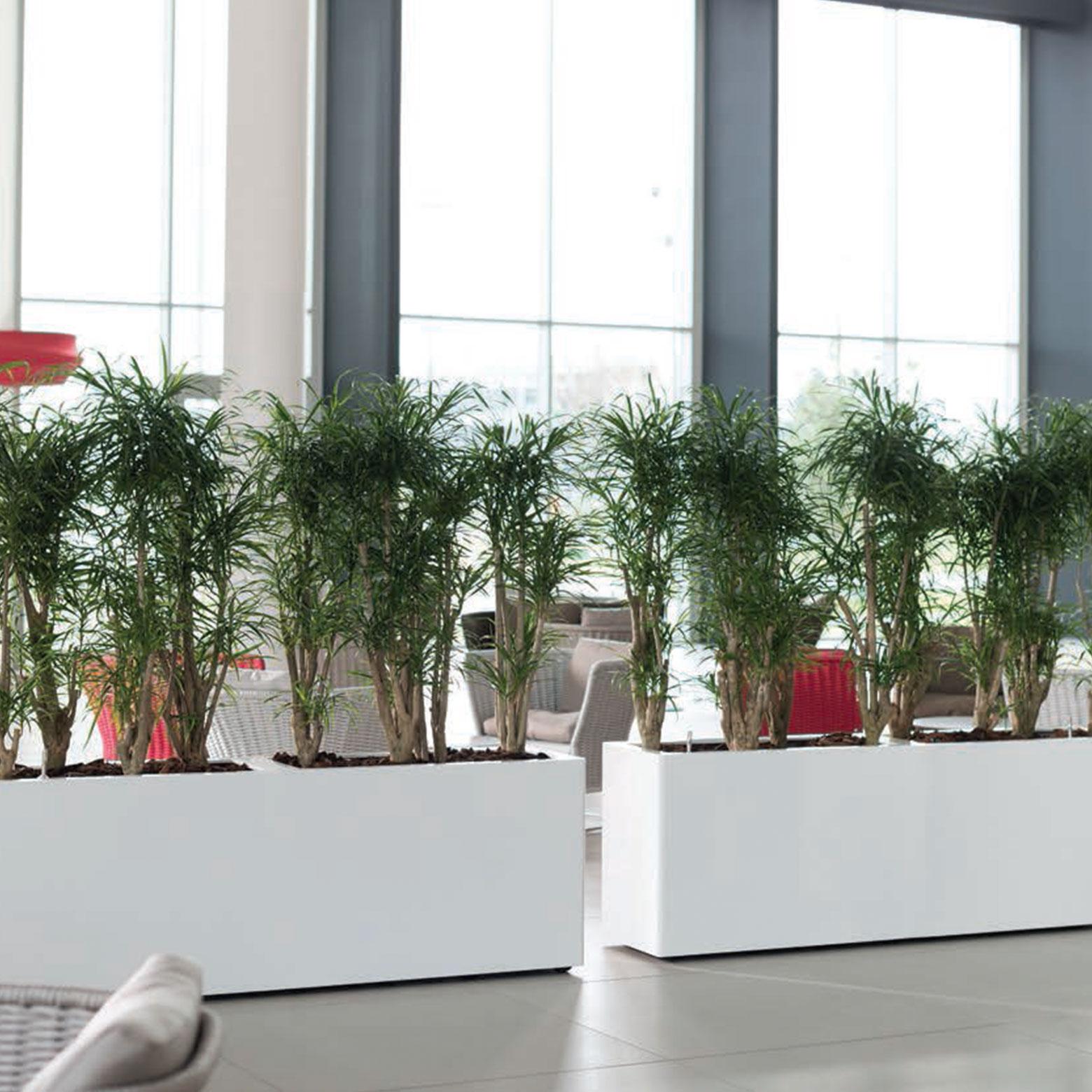 - lange hoge plantenbakken witte roomdivider afscheiding ruimtes ruimten interieur - interieurbeplanting kantoorplanten kantoorbeplanting hydrocultuur onderhoud planten plantenonderhoud moswand moswanden